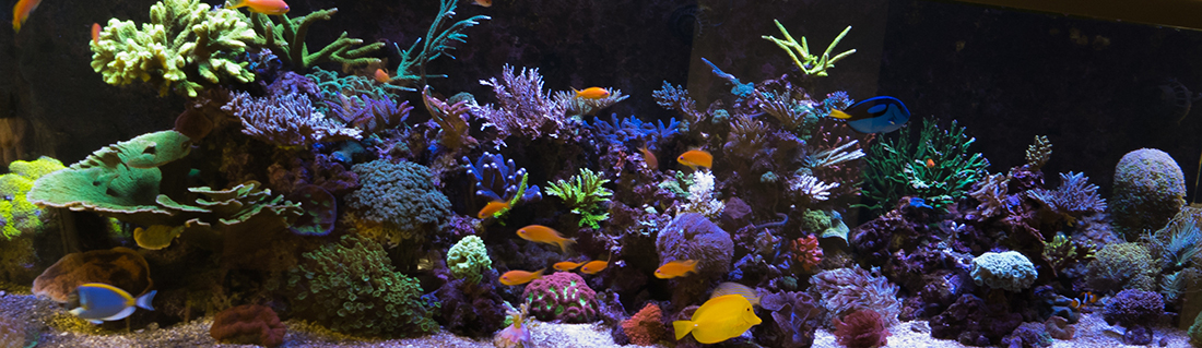 jurinis akvariumas