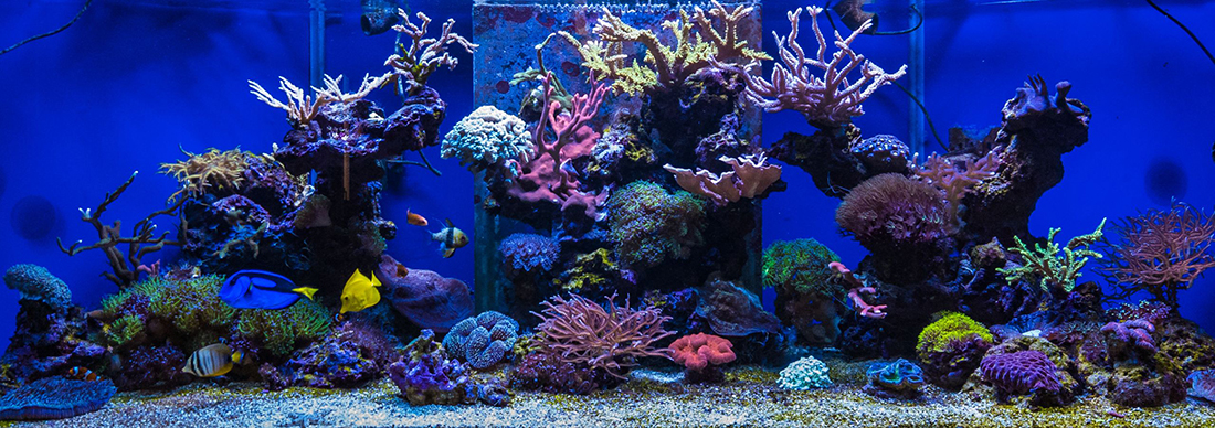juriniai akvariumai