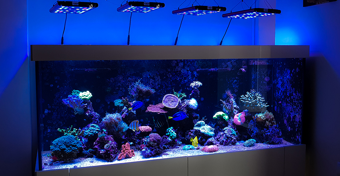 saruno jurinis akvariumas