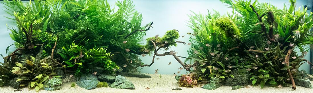 amano akvariumas