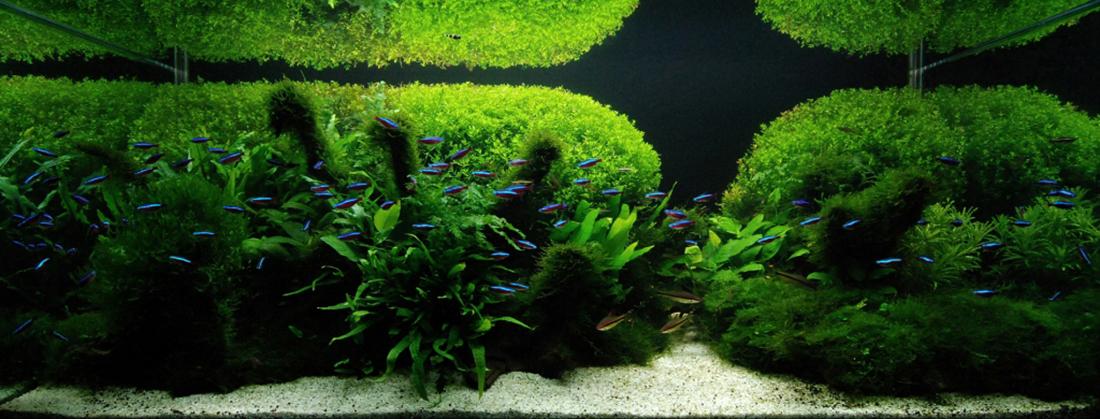 amano akvariumai