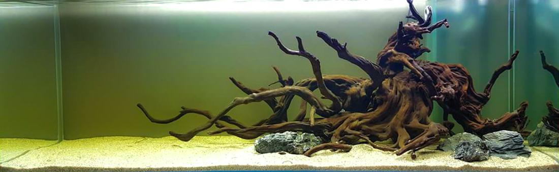 gelavandenis akvariumas